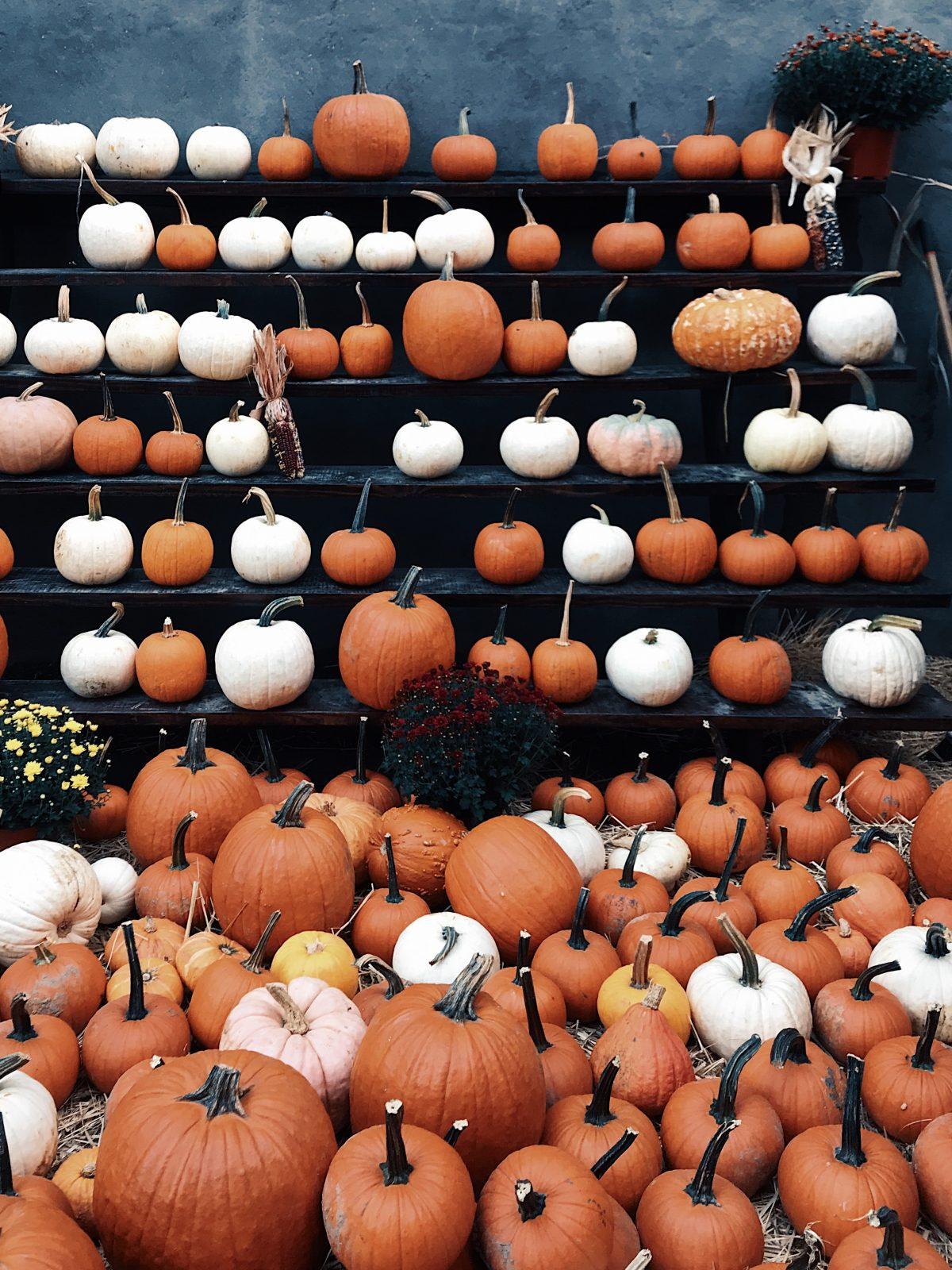 How to Recycle Halloween Pumpkins